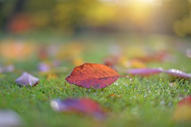The Colour of Autumn...