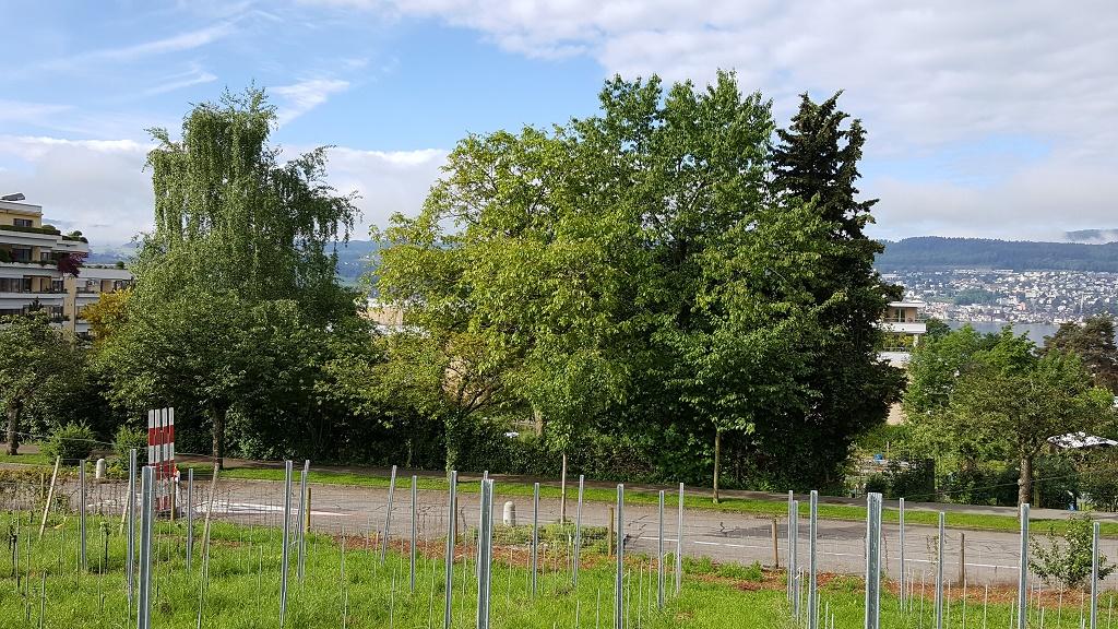 Gartenaktion vom 20.05.2017