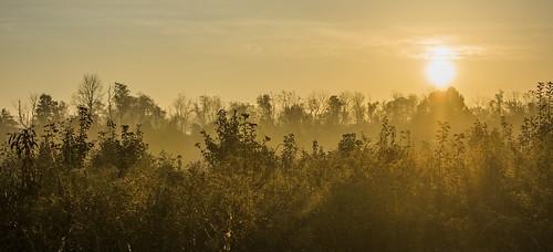 sunrise mtpleasant howardcountyconservancy maryland