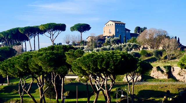 The Stone Pines of Palatine Hill