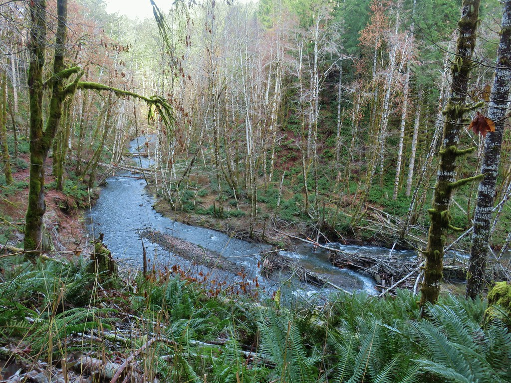 Gales Creek