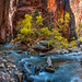 Multishot Panorama! Zion Canyon Peak Fall Colors Cottonwoods Zion Narrows Hike Pano Stitched in Lightroom CC! Zion National Park Fall Foliage Utah Autumn Colors Fine Art Landscape & Nature Photography! Sony A7R III & Sony FE 16-35mm f/2.8 GM G Master Lens