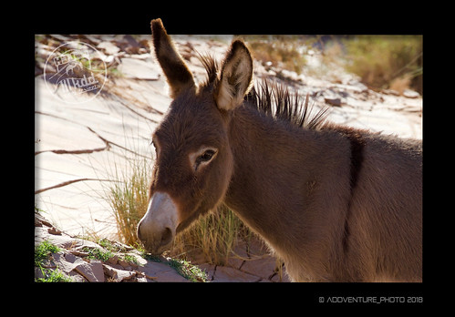 BURRO | by ADDVENTURE PHOTO
