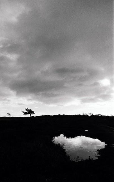 On Stoborough Heath...
