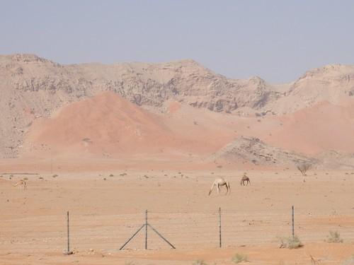 Van Hatta naar Al Ain - 2