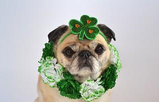 Happy St. Patrick's Day! | by DaPuglet