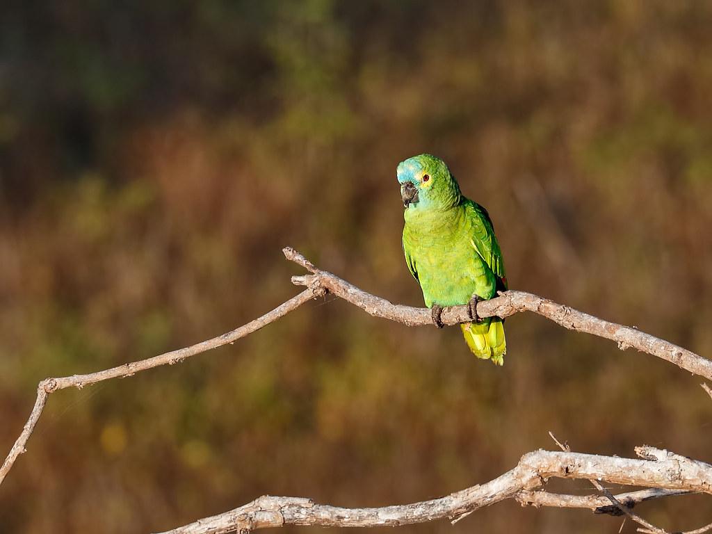 Pantanal_1954