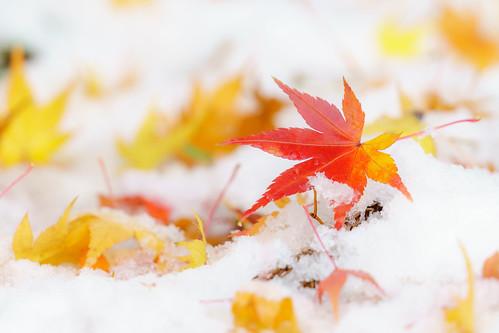 冬をコラボで | by hiroching
