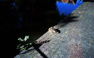 Resting duck | by Tiger Mendoza