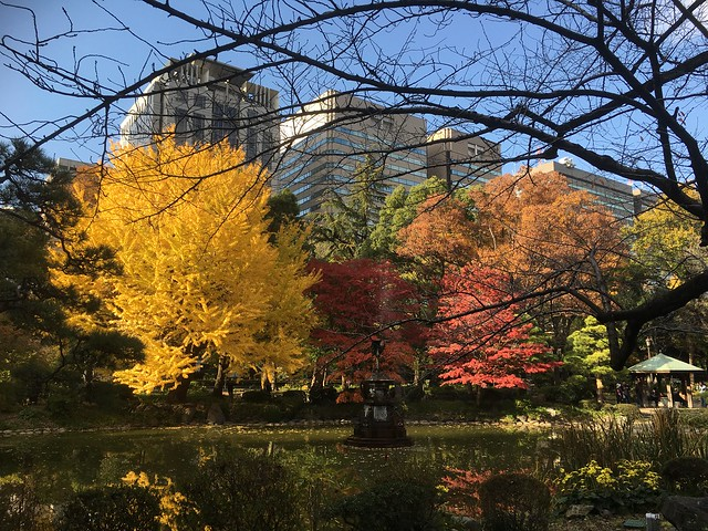 Autumn Leaves in the Central Tokyo, Japan