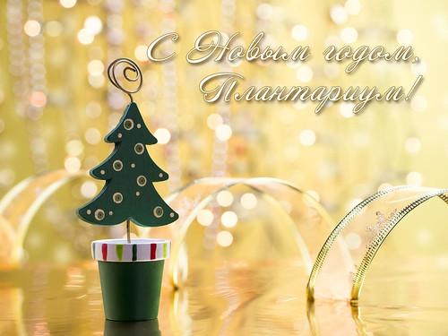 С НГ-Плант-2019 | by Mariansary