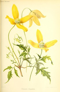 n579_w1150 | by BioDivLibrary
