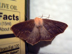 Moth Prefers Olive Oil   by Such A Groke