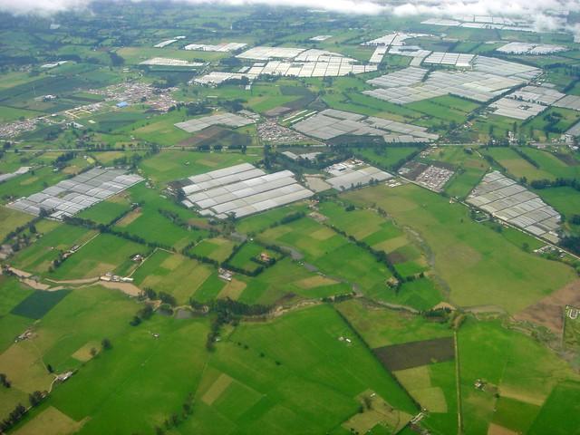 Bogota - Flower growing fields