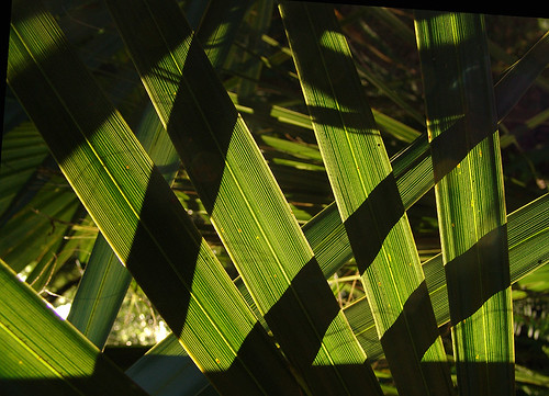 palms and shadows | by zen