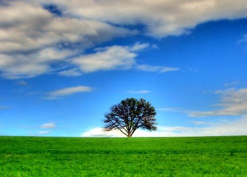 sky tree map tone chrisframe