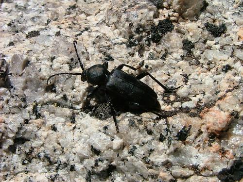 Beetle | by George