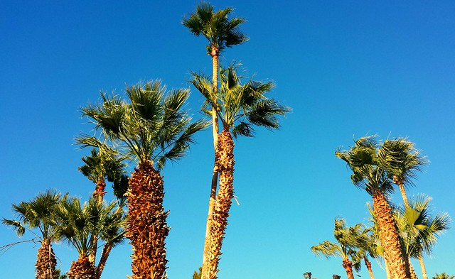 Forever Summer, Southern California