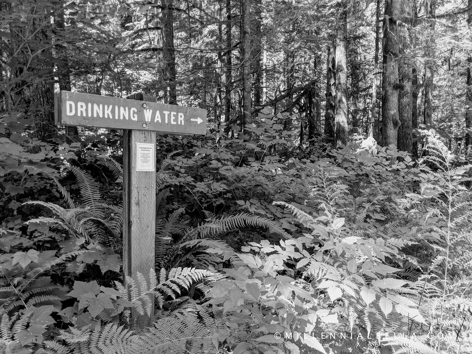 Tinkham Campground Drinking Water Fountain