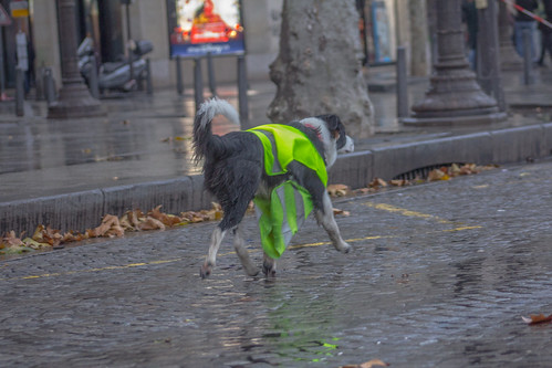 Gilets Jaunes dog | by NightFlightToVenus
