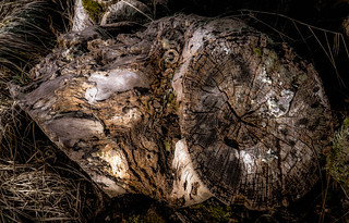 """stump """"aged"""" 