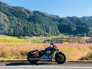 Harley Davidson Japan | by toyohikon