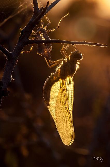 Contraluz madrugador / Backlight early bird