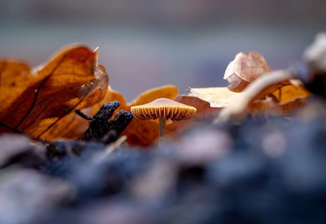 Autumnal Mushroom (Smile on Saturday - Nature Is An Artist)