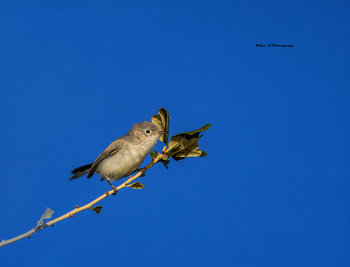 sunset nikon nikond7500 tamron100400 snakewarriorsisland lights bluegraygnatcatcher