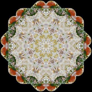 Raw Pizza Kaleidoscope