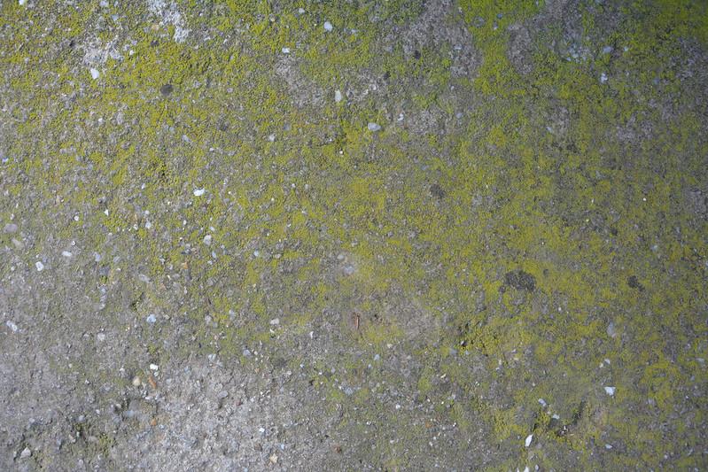 Mossy concrete texture #08