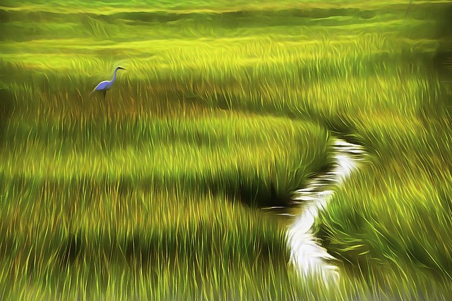 Bird in Marsh Grass