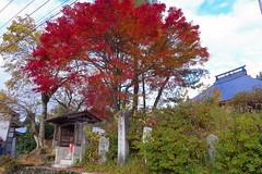 駅付近の名入集落(秋)