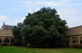Chris Examines the Tree, New College Cloister, Oxford