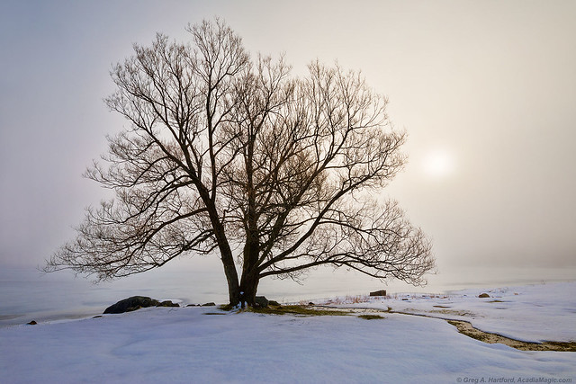 Winter Morning with Fog