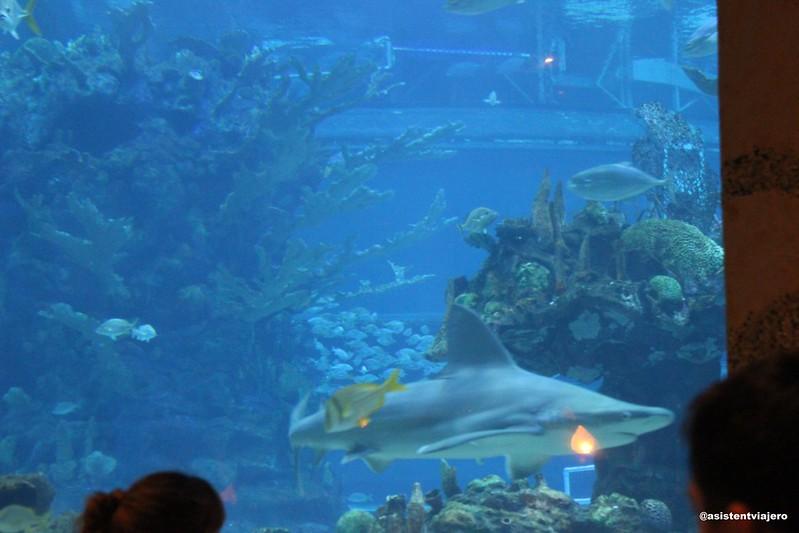 Coral Reef 8