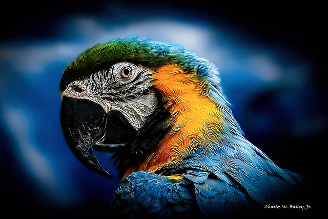 Digital Cartoon of a Blue-and-Yellow Macaw by Charles W. Bailey, Jr.