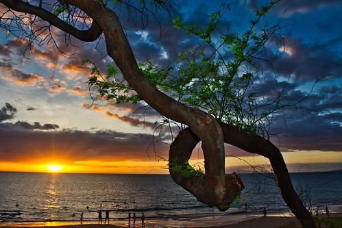 Loophole Tree   by Kirt Edblom