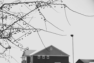 181125-branches-tree-house.jpg