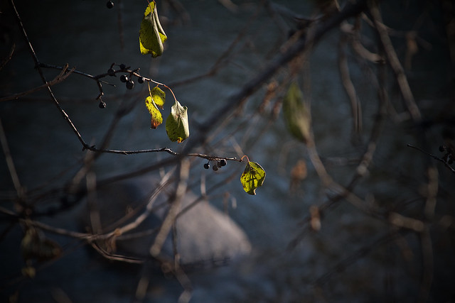 stone, branches, river's light, 2/4 11-10-18
