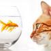 Peanut Cat Fish Stare