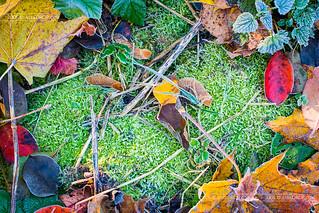 CRW_1655 - Frosen Leaves tableau | by AlexDROP