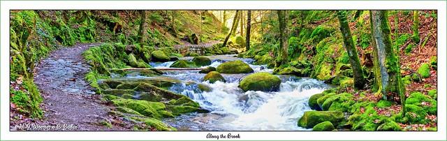 Along the Brook