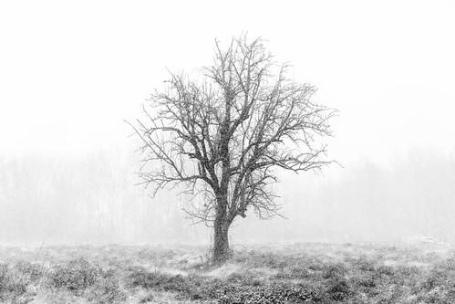 catskill newyork unitedstates us 5dmk4 ef70200f28isiiusm snow hudsonvalley upstatenewyork trees blackwhite llenses landscape outdoors