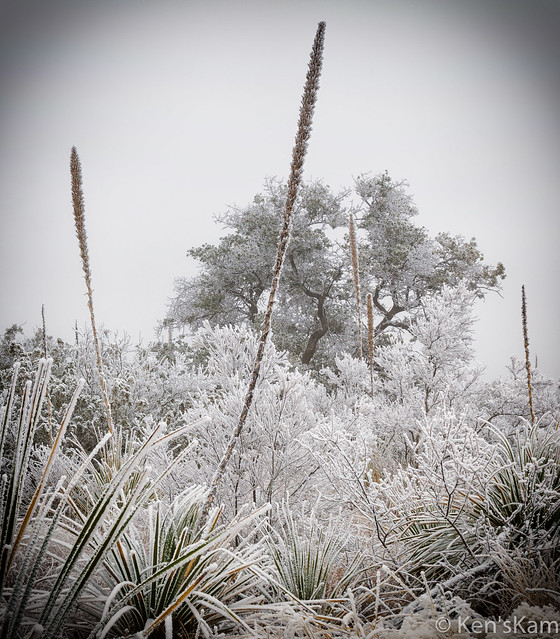Winter in Big Bend