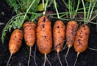 c'est l'histoire de six carottes... | by sydepoorte