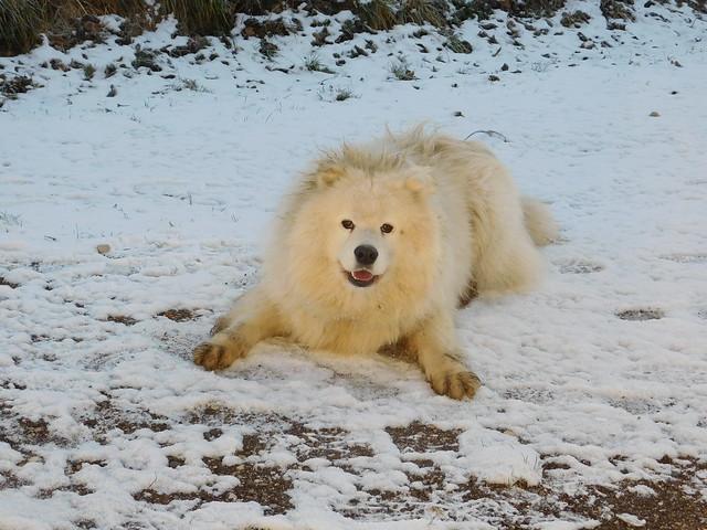 Ein Flokati im Schnee!!