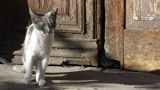 Tbilisi Cats | by Anthony Surace