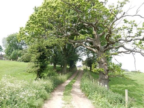 twisty trees twisty path Otford Circular