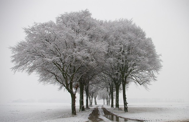 Allee in Farbe